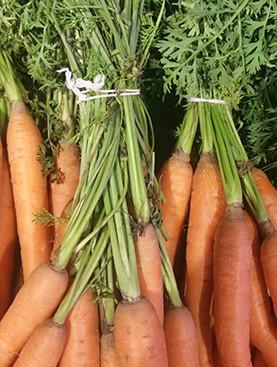 Bundelen wortels